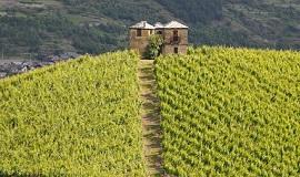 Vinos del Valle de Aosta